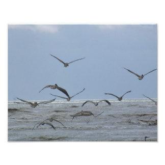 Pelícanos sobre la foto del océano