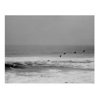 Pelícanos y ondas en postal blanco y negro
