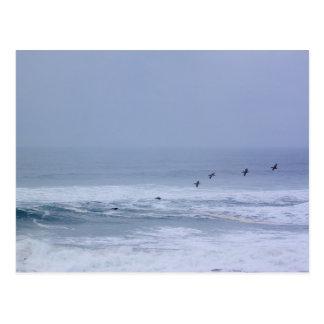 Pelícanos y postal de las ondas