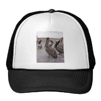 Pelicans 1 trucker hat