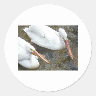 pelicans,2 classic round sticker