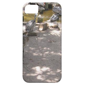 Pelicans #4 iPhone 5 case