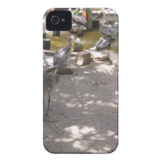 Pelicans #4 iPhone 4 case