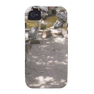 Pelicans #4 Case-Mate iPhone 4 cases