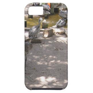 Pelicans #4 iPhone 5 cases