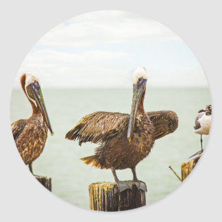 Pelicans and Seagull Classic Round Sticker