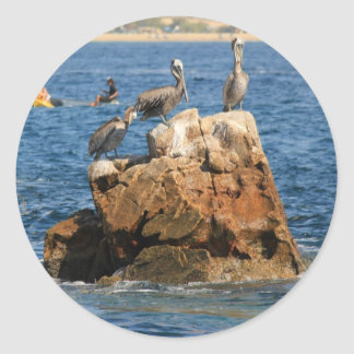 Pelicans at Cabo San Lucas Round Stickers