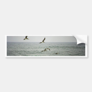 Pelicans at Horsfall Beach, Oregon Bumper Sticker