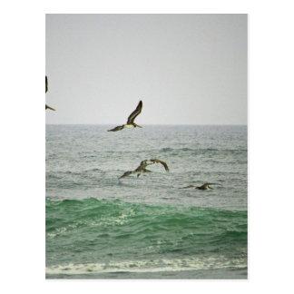 Pelicans at Horsfall Beach, Oregon Postcard