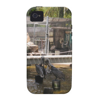 Pelicans iPhone 4/4S Covers