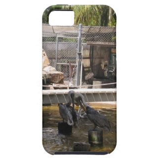 Pelicans iPhone 5 Cover