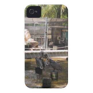 Pelicans iPhone 4 Case-Mate Case