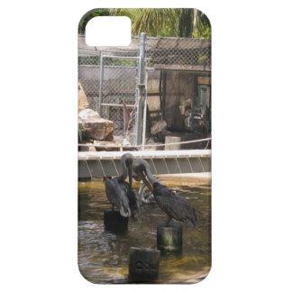 Pelicans iPhone 5 Case
