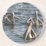 Pelicans Coaster