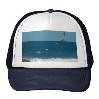 Pelicans flying in formation Costa Rica Hat