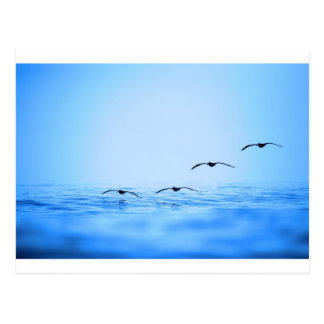 Pelicans flying over ocean postcard