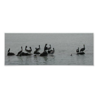 Pelicans in Waiting Poster