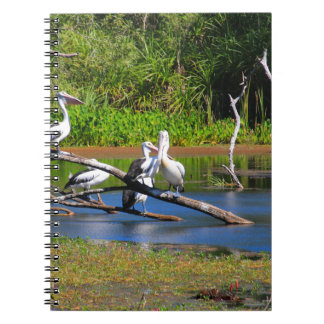 Pelicans in wetlands, Outback Australia Notebook