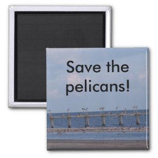 PELICANS! MAGNET