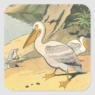 Pelicans on the Beach Illustrated Square Sticker
