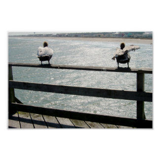 Pelicans on the boardwalk poster