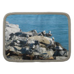 Pelicans on the Rocks Folio Planners