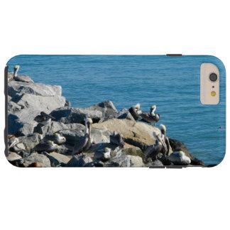 Pelicans on the Rocks Tough iPhone 6 Plus Case