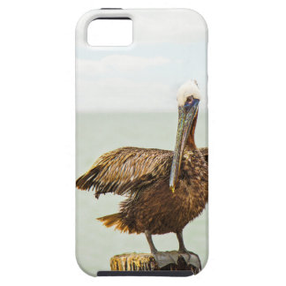 Pelicans perched on posts iPhone SE/5/5s case
