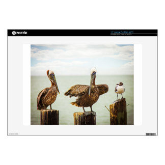 Pelicans perched on posts laptop decals