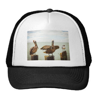 Pelicans perched on posts trucker hat