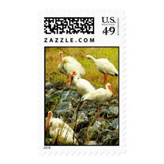 PELICANS POSTAGE STAMP