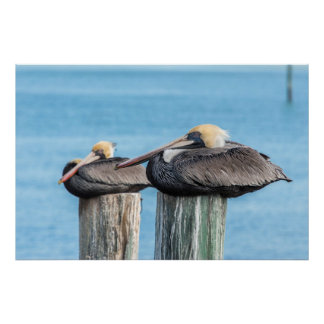 Pelicans roosting on pylon 2 poster