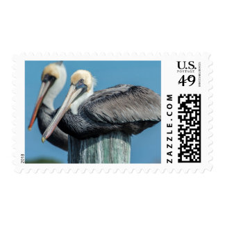 Pelicans roosting on pylon postage stamps