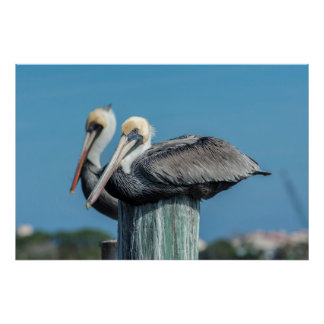 Pelicans roosting on pylon poster