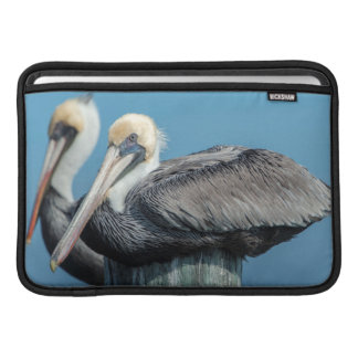 Pelicans roosting on pylon sleeve for MacBook air