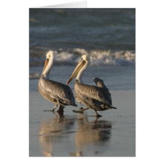 Pelicans Strutting on the Beach Card