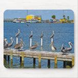Pelicans Sunbathing Mouse Pads