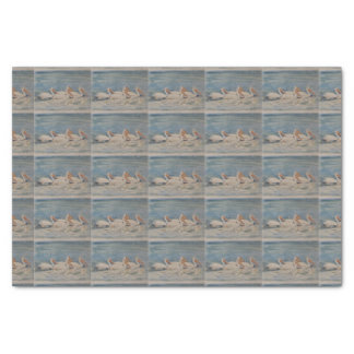 Pelicans Swimming on Calm Waters Tissue Paper