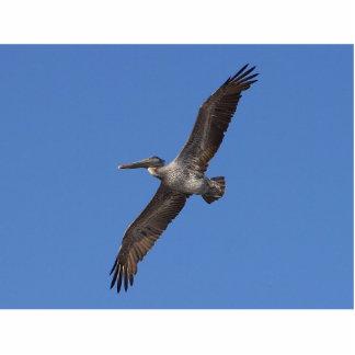 Pelicans Wings Flying Photo Sculptures