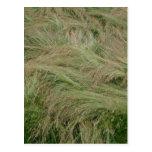 pelo de la hierba postal