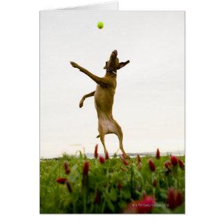 Pelota de tenis de cogida del perro en mediados de tarjeta de felicitación