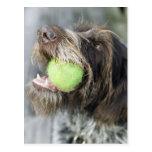 Pelota de tenis penetrante del perro del postal