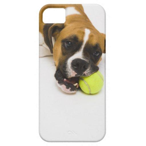 Pelota de tenis penetrante del perro funda para iPhone 5 barely there