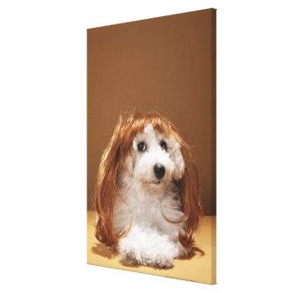 Peluca del jengibre del perrito que lleva lona envuelta para galerias