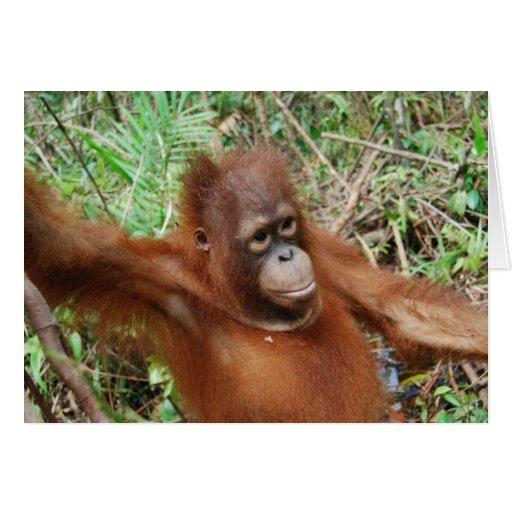 Peluche del orangután felicitaciones