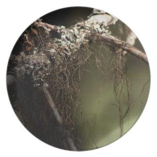 Pelusa del bosque; Ningún texto Plato De Cena