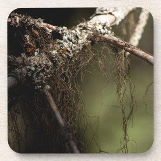 Pelusa del bosque; Ningún texto Posavaso