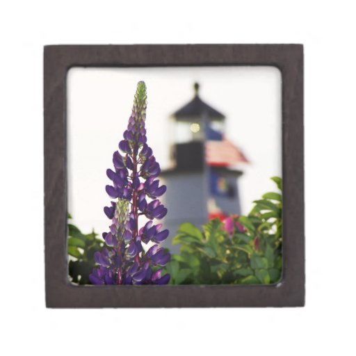 Pemaquid Point Lupine Premium Gift Boxes