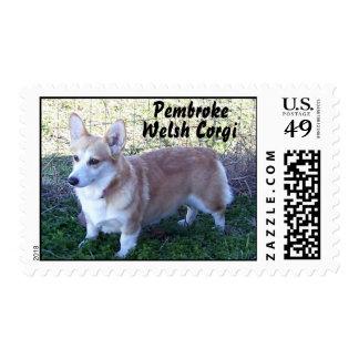 Pembroke Welsh Corgi #1 Postage Stamp