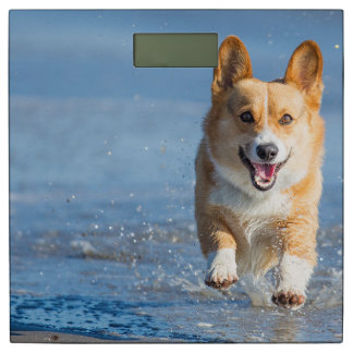 Pembroke Welsh Corgi Dog Running On The Beach Bathroom Scale